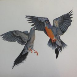 731_passenger pigeon_jennifer