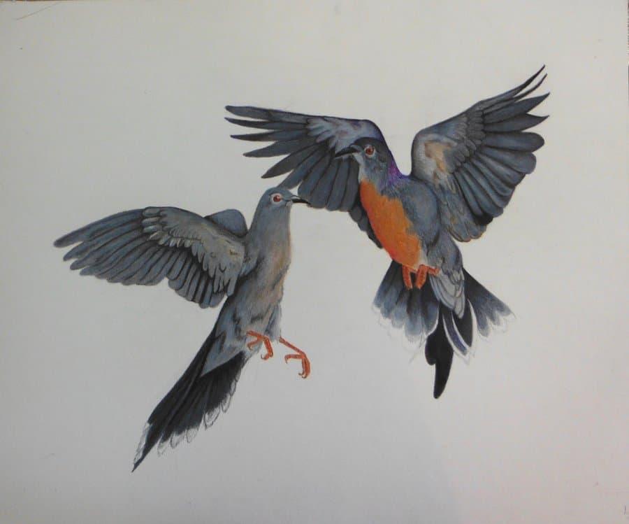 Passenger Pigeon by Jennifer
