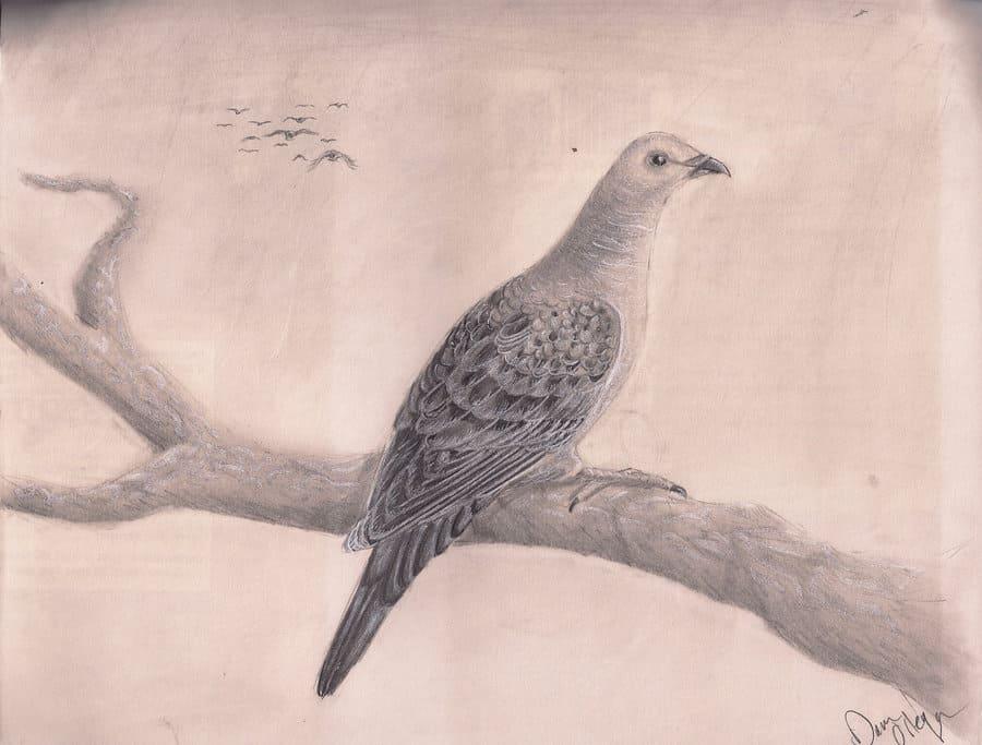 Passenger Pigeon by Dana Ortega