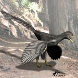 745_archaeopteryx_nobu_tamura