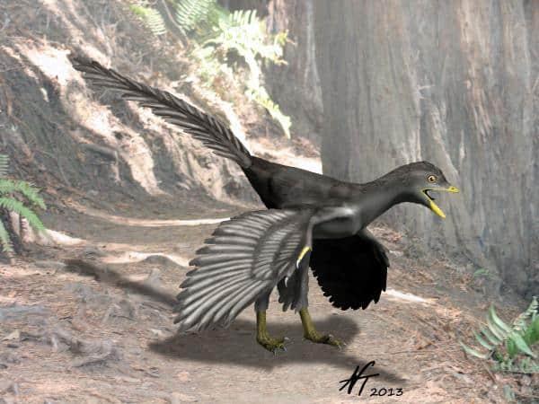 Archaeopteryx by Nobu Tamura