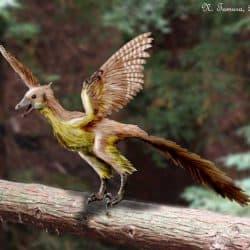 747_archaeopteryx_nobu_tamura