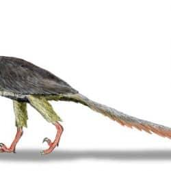 748_archaeopteryx_nobu_tamura