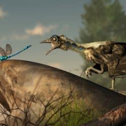 750_archaeopteryx_daniel_eskridge