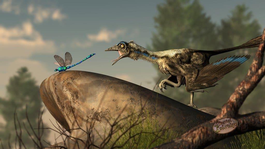 Archaeopteryx by Daniel Eskridge