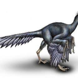 751_archaeopteryx_melnik_vitaliy