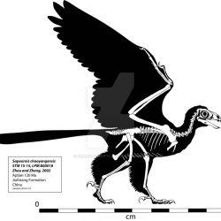 753_archaeopteryx_anton