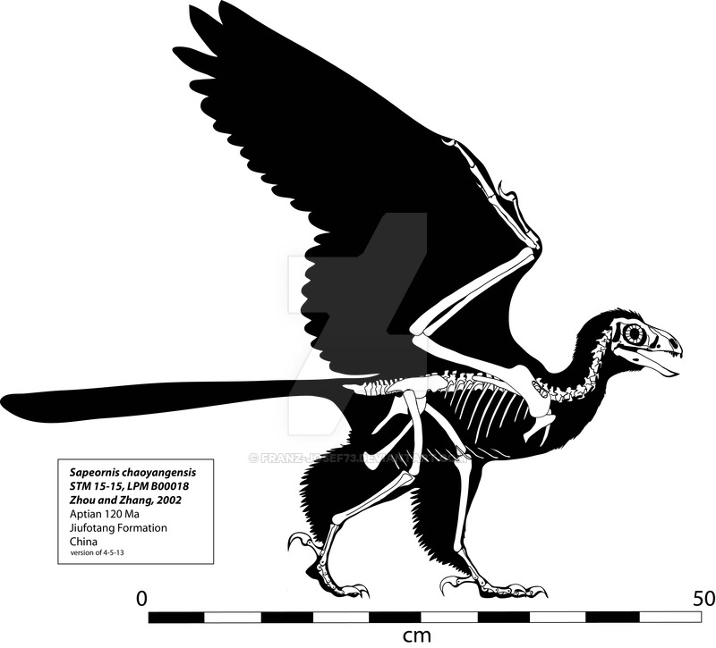 Archaeopteryx by Anton