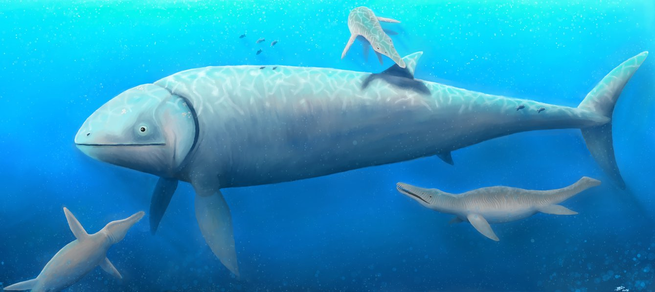 Leedsichthys Facts And Pictures