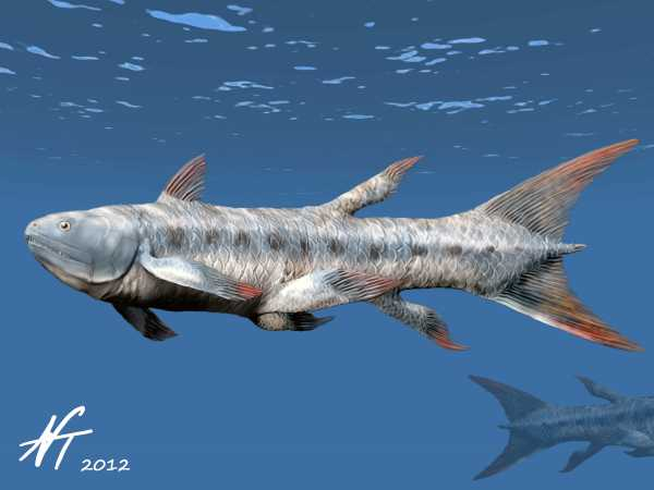 Coelacanth by Nobu Tamura