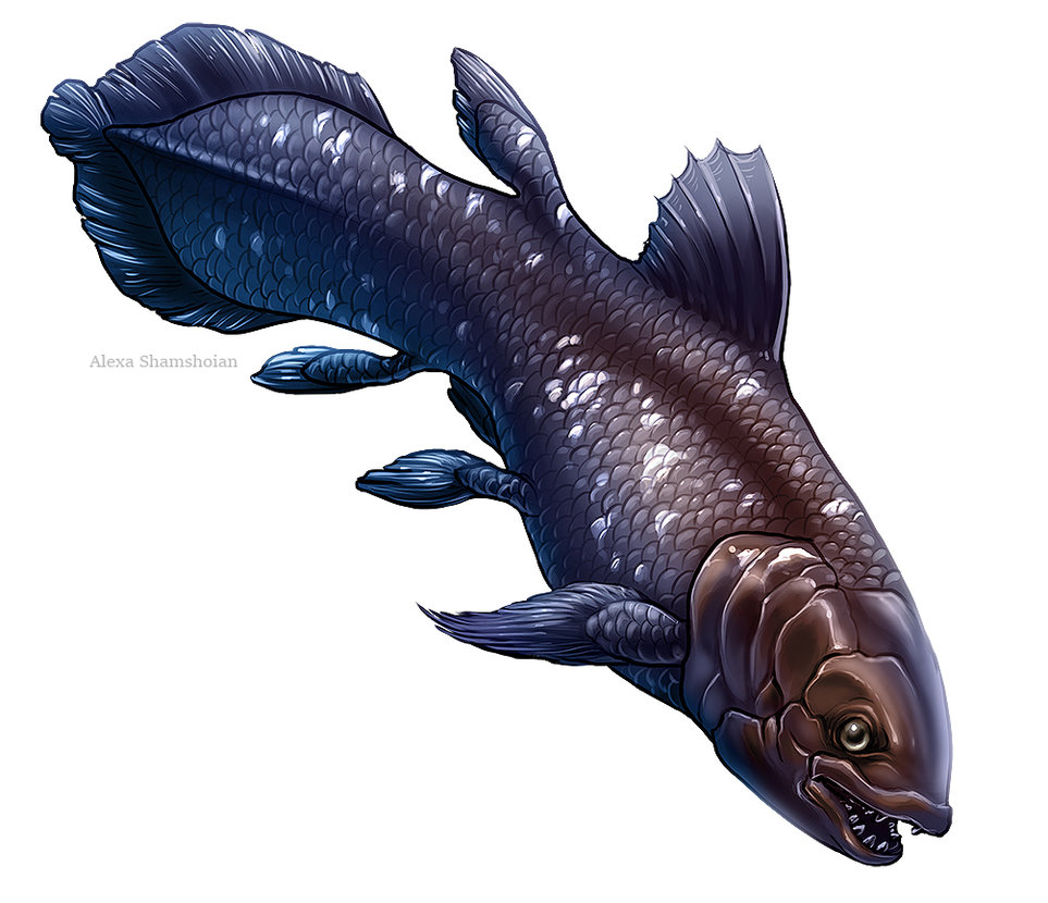 Coelacanth by Tikall