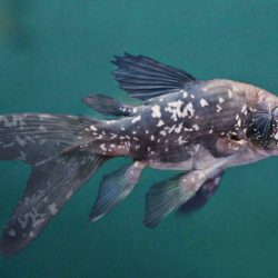 790_coelacanth_rob_westdorp