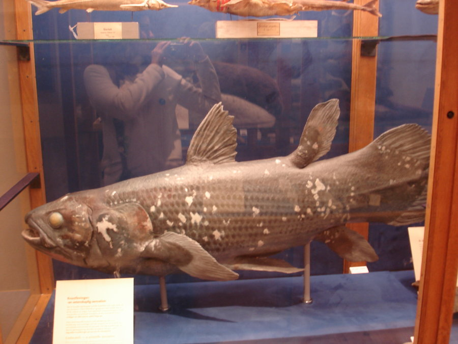 Coelacanth by Flyg-stock