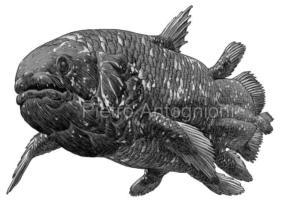 Coelacanth by Pietro Antognioni