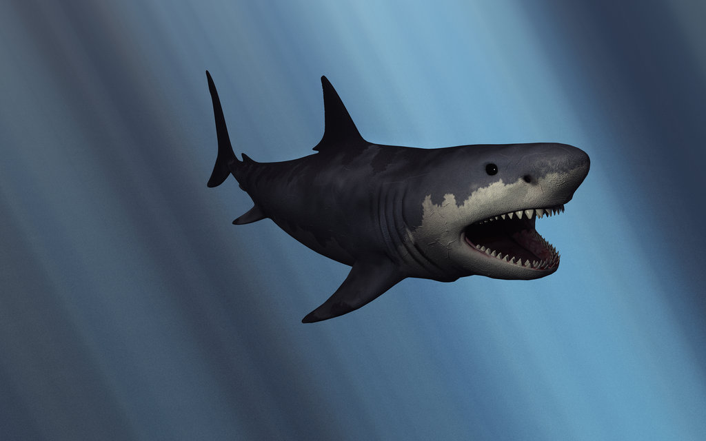 Megalodon by Mark A Stevenson