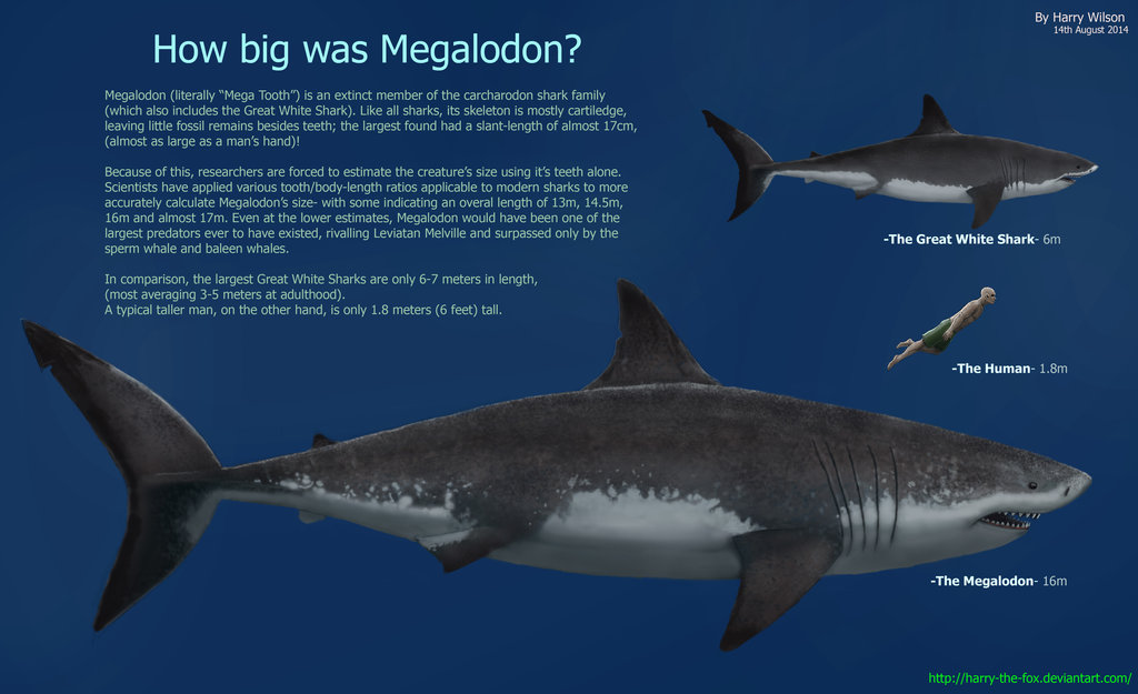 Megalodon by Harry Wilson