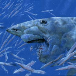 819_helicoprion_steve_white