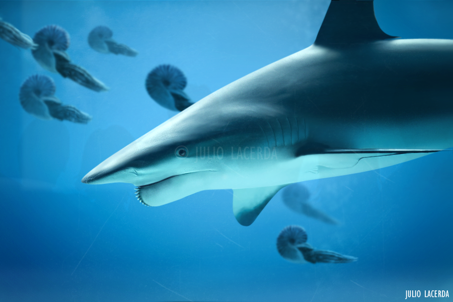 Helicoprion by Julio Lacerda
