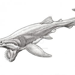 825_helicoprion_aaron_john_gregory