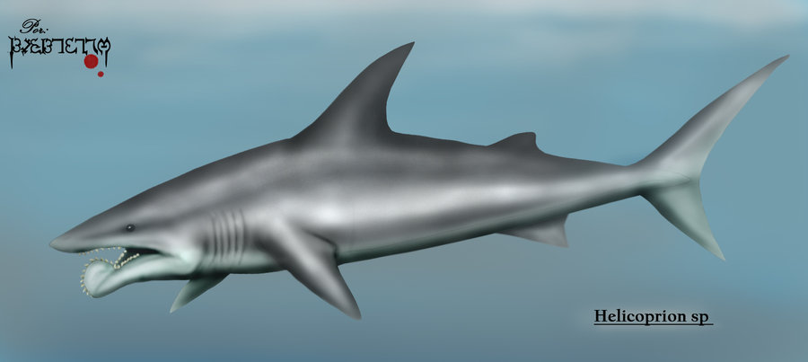 Helicoprion by Eduardo