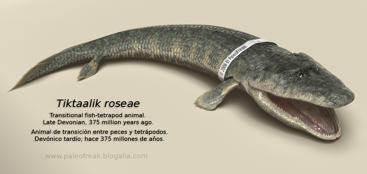 Tiktaalik by El PaleoFreak