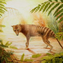 860_tasmanian tiger_jayne