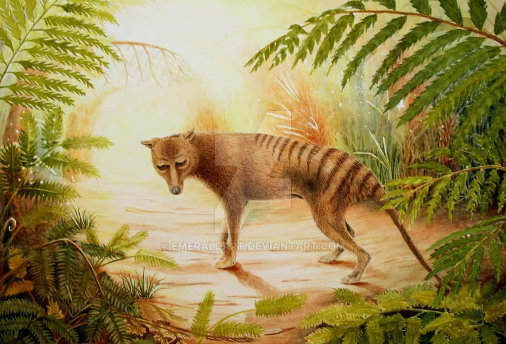 Tasmanian Tiger by Jayne