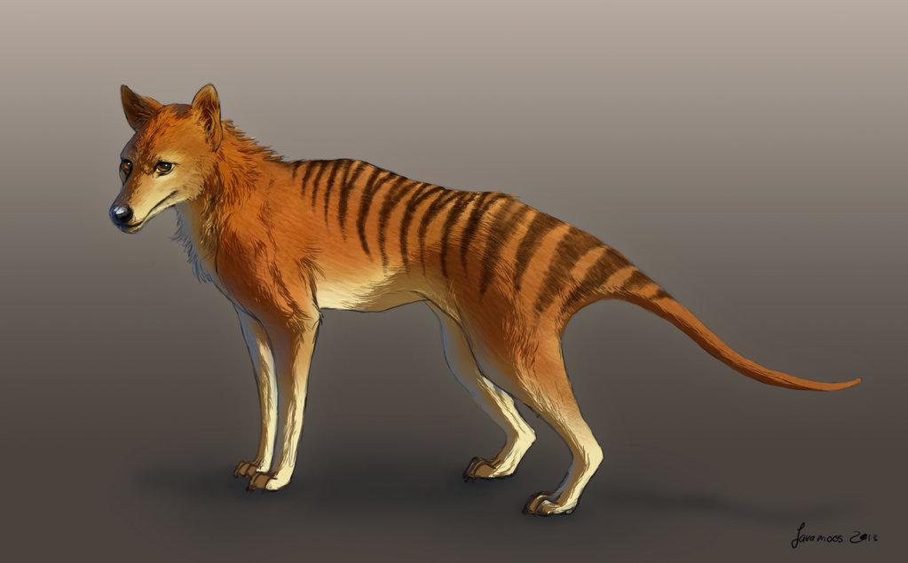 Tasmanian Tiger by Javamoos