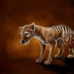 864_tasmanian tiger_griffin