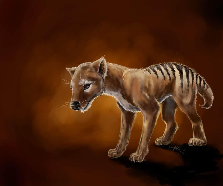 Tasmanian Tiger by Griffin