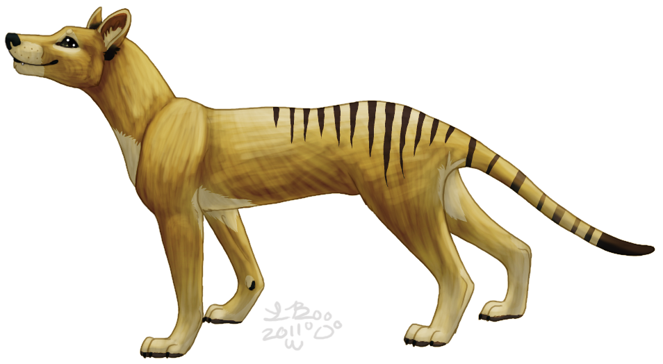 Tasmanian Tiger by Griffin