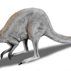 868_procoptodon_nobu_tamura