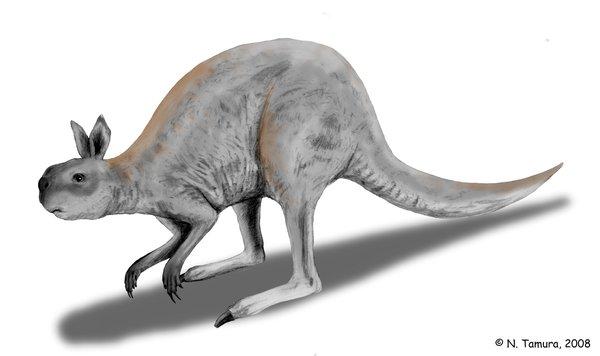 Procoptodon by Nobu Tamura