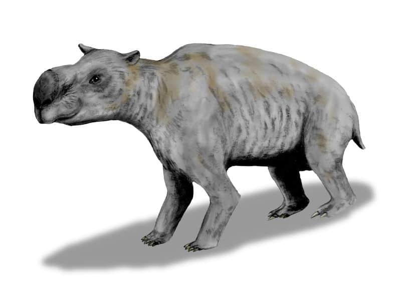 Diprotodon by Nobu Tamura