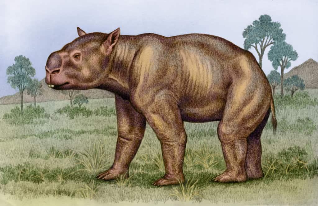 Diprotodon by Willem van der Merwe