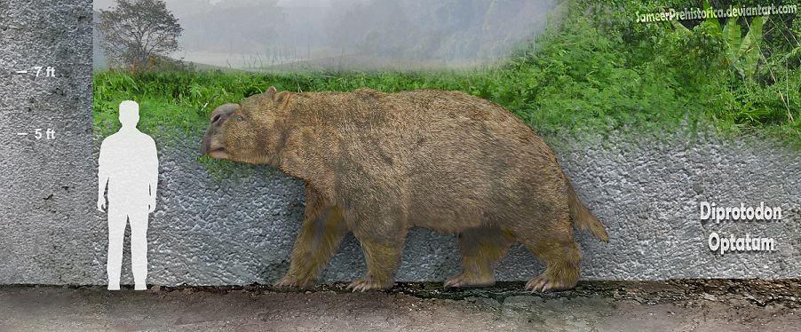 Diprotodon by SameerPrehistorica