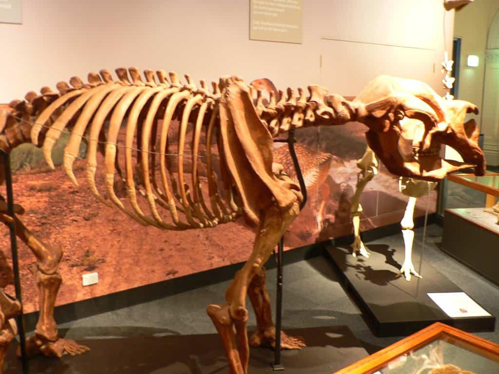 Diprotodon by Steve