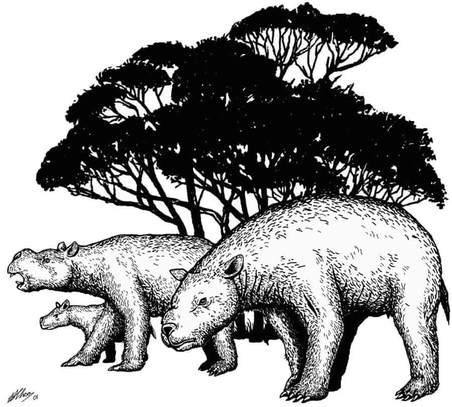 Diprotodon by Brian Choo