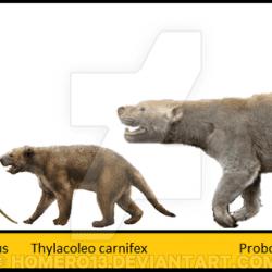 890_thylacoleo_homero