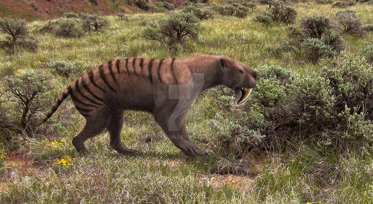 Thylacosmilus by Mehdi Nikbakhsh