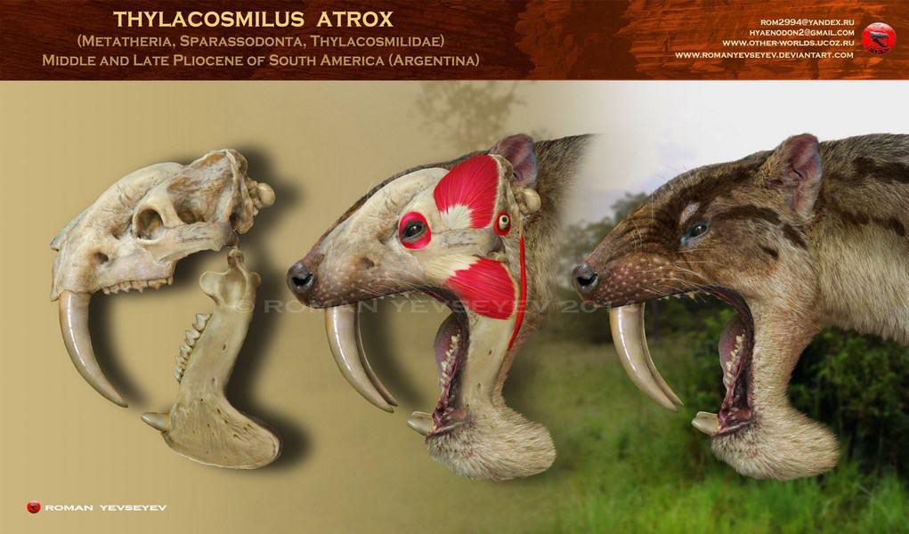 Thylacosmilus by Roman Yevseyev