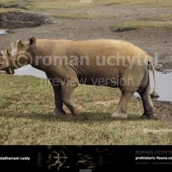 923_uintatherium_roman_uchytel
