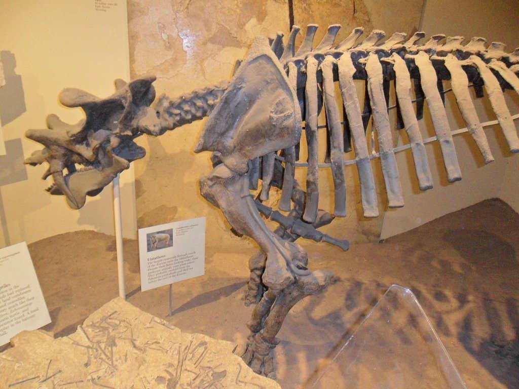 Uintatherium by Joshua Craig Beytien