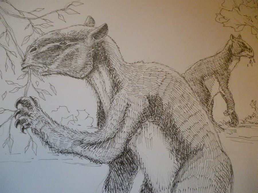 Chalicotherium by Tim Deceuninck
