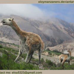 955_macrauchenia_eloy_manzanero_criado