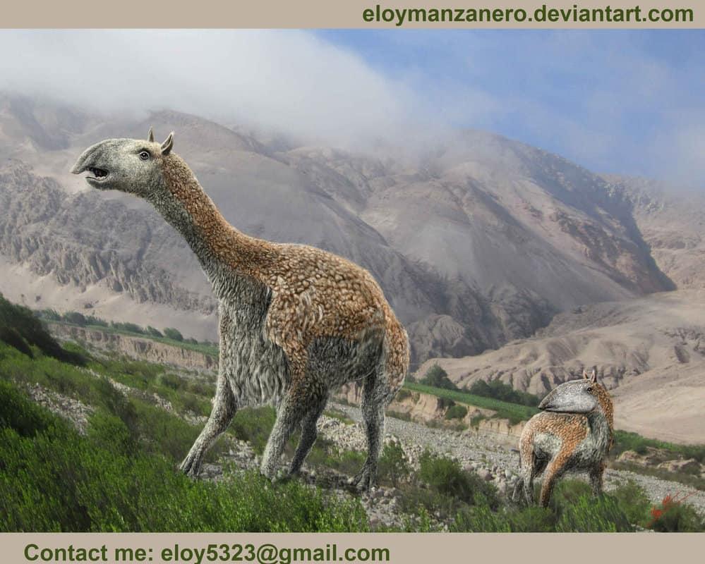 Macrauchenia by Eloy Manzanero Criado