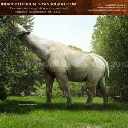 966_indricotherium_roman_yevseyev