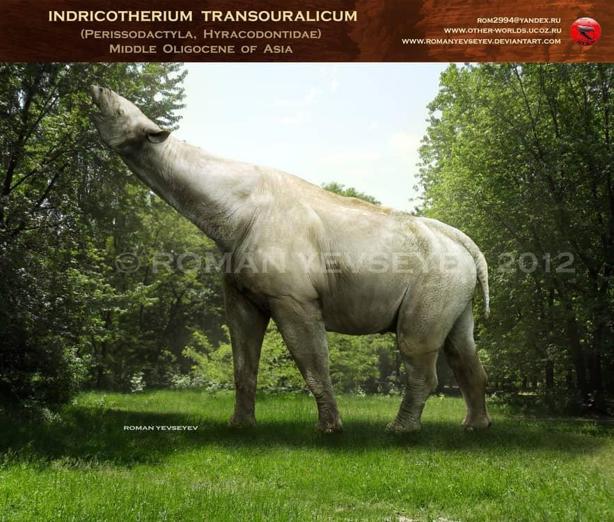 Indricotherium by Roman Yevseyev