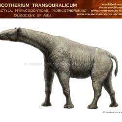 967_indricotherium_roman_yevseyev