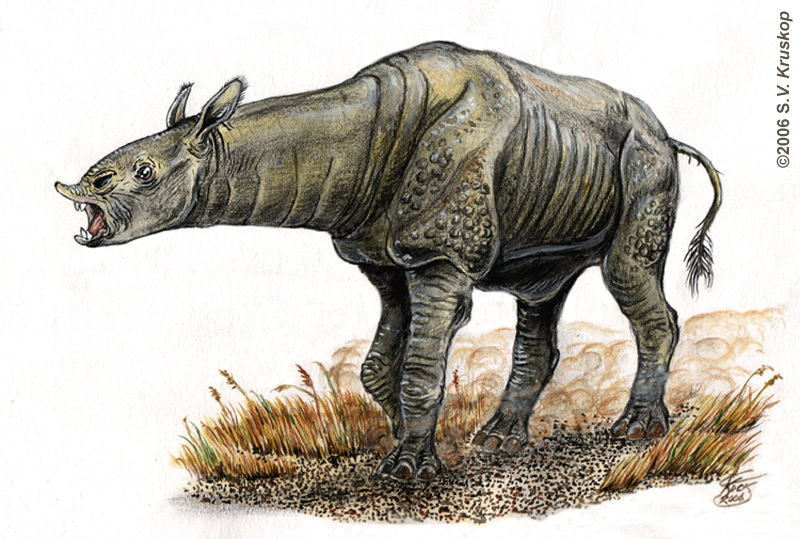 Indricotherium by Serge Kruskop